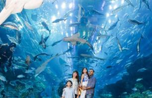 Dubai Aquarium & Underwater Zoo – Tickets for the marine attraction at Dubai Mall