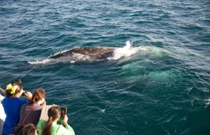 Whale and Dolphin Watching Cruise – Departing from Los Angeles or Long Beach